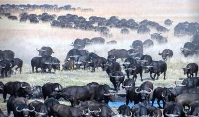 Dal Parco Kruger al Chobe