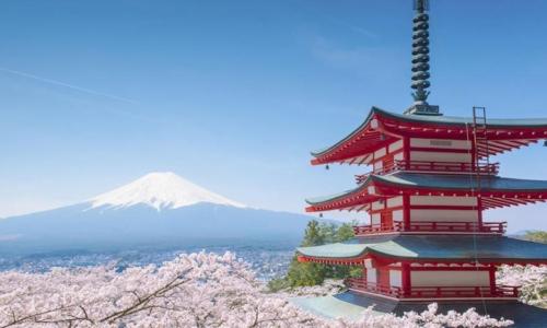 Voyager Sakura